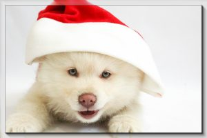 Celebrating the Holidays with Your Pets