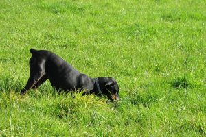 Has Your Dog Devastated Your Garden? Then Read This